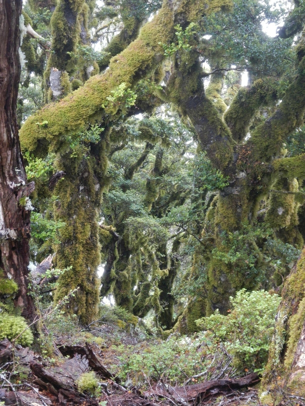 Moss lined trees in New Zealands Marlborough Sounds