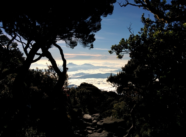 Natural frame Looking down the slopes of Mount Kinabalu Borneo