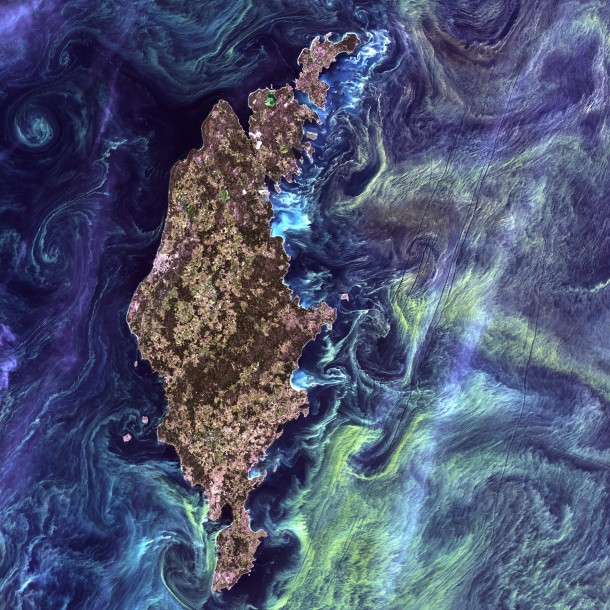 Natures Beautiful Art From space Gotland a Swedish island looks like a Van Goghs painting with greenish streaks of phytoplankton swirling in dark-blue water