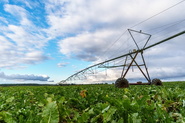 Old irrigation system in a sugar beet field Mecklenburg  Germany
