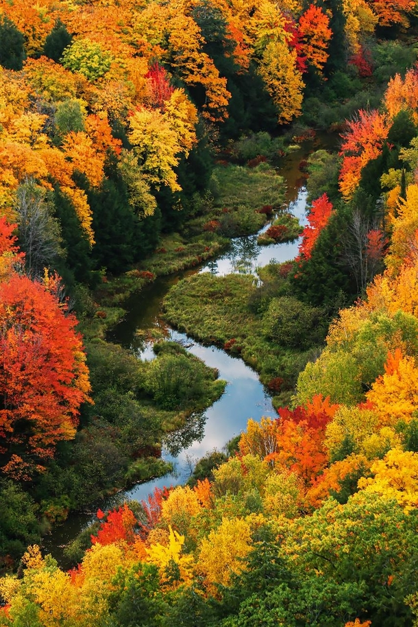 One of the best autumn displays I have seen  years ago in the Porcupine Mountains of Michigan