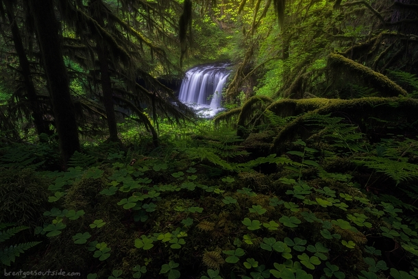 Oregon is so freakin lush Upper Butte Creek Falls is peeking through