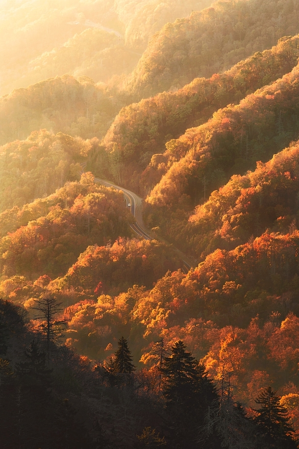 Peak Fall Color at Sunrise in the Smoky Mountains Tennessee