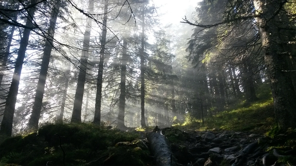 Picture I took in the deep forests of Norway this weekend