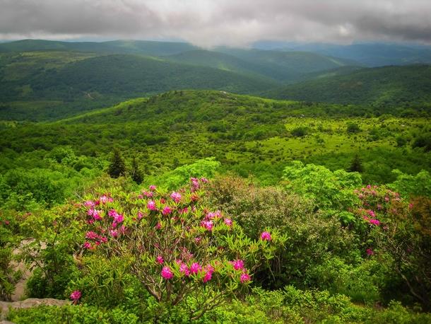 Rhododendron Gap - Grayson Highlands Virginia