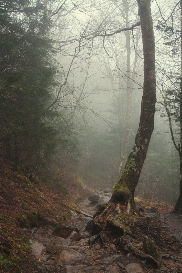 Segment of the Appalachian Trail inside Great Smoky Mountains National Park TN
