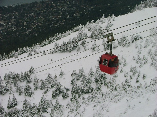 Skylift over snowy trees