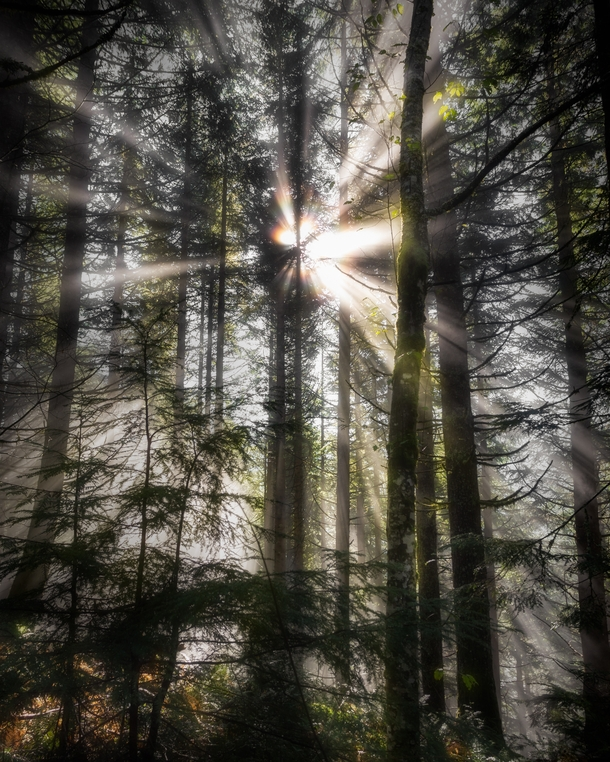 Stunned by these magical beams in the forest Alpine Lakes Wilderness WA