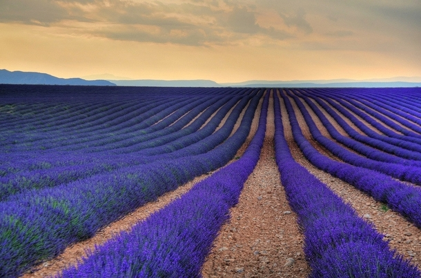 Stunning Lavender Field in Aix-En Provence France