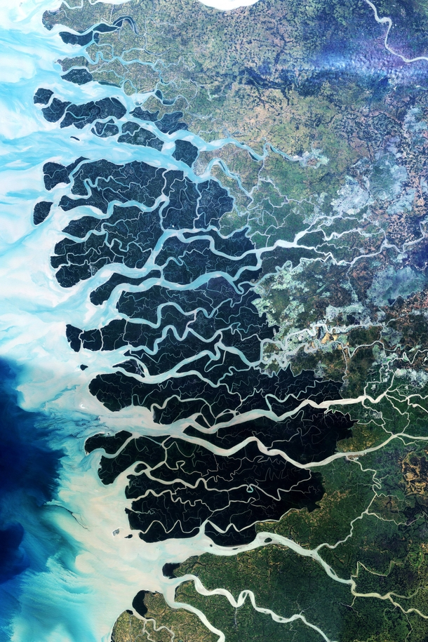 Sundarban forest in Bangladesh and India the largest remaining tract of mangrove forest in the world  photographed by NASA Earth Observatory