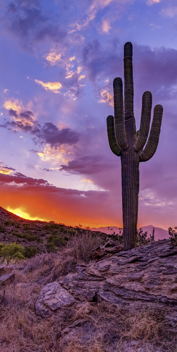 Sunset in Saguaro National Park Arizona