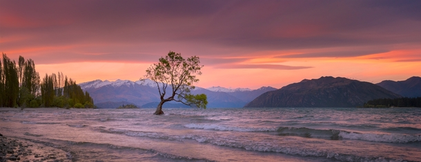 The lone tree of Lake Wanaka New Zealand  by Hansel Haddams x-post rNZPhotos