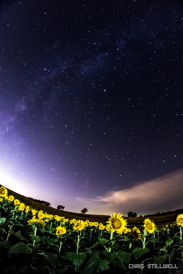The milkyway over a sunflower field in Lawrence Kansas