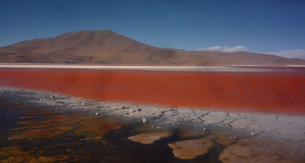 The otherworldly colours of Laguna Colorada Bolivia