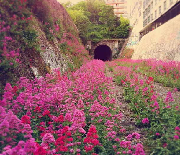 The Paris Inner City Little Belt Railway Abandoned Parisian line since  this railway is now full of beautiful flowers