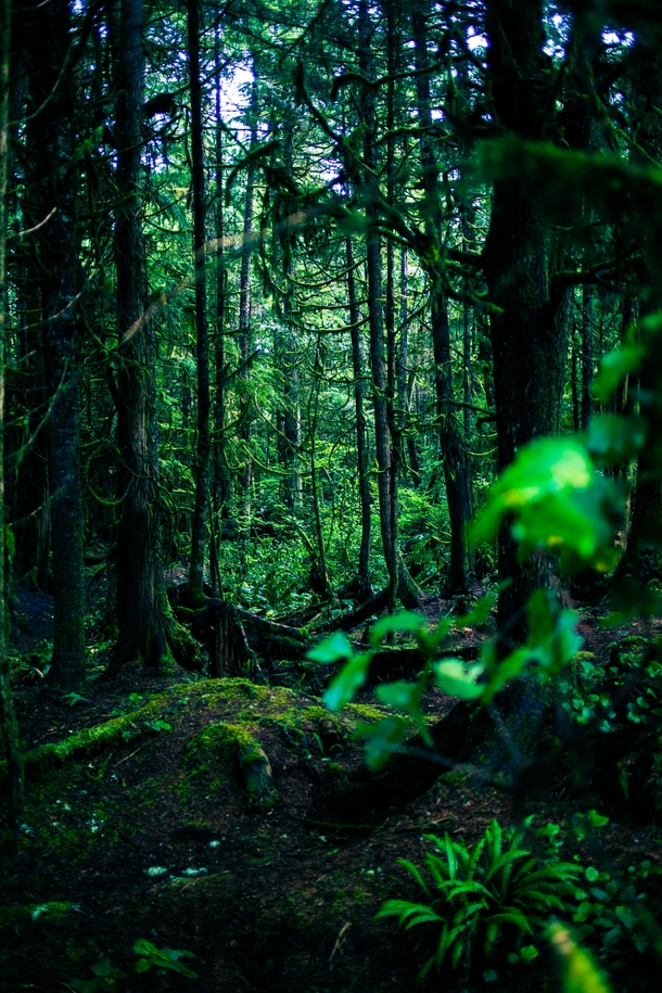 The rain forest at Green Point British Columbia