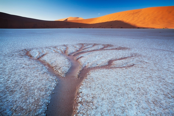 The trees of Deadvlei - erosion creating tree-like shapes in a salt pan in South Africa  photo by Hougaard Malan