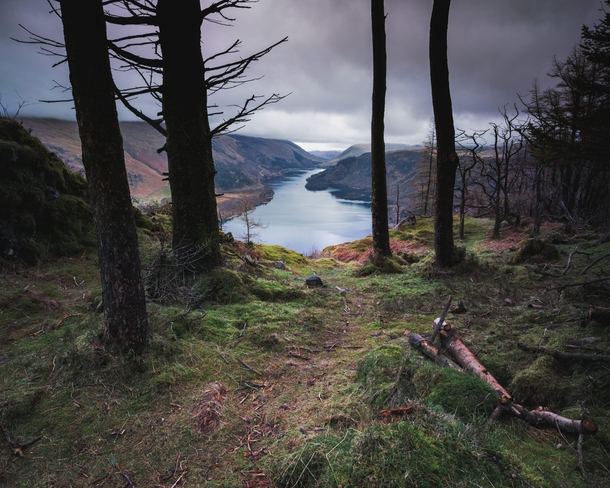 These trees perfectly framed the view of Thirlmere amp its fells Lake District England
