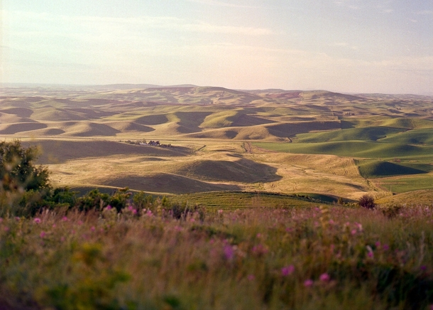 This is what summer in the Palouse is really supposed to look like From Steptoe Butte WA