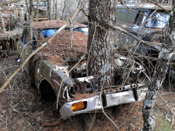Tree emerging from an abandoned car -Rhode Island-