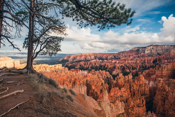 Tree overlooking the Hoodoos at Bryce Canyon National Park
