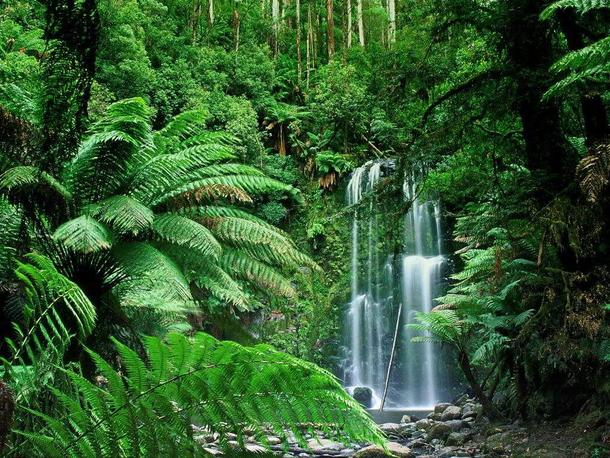 tropical rainforest research paper