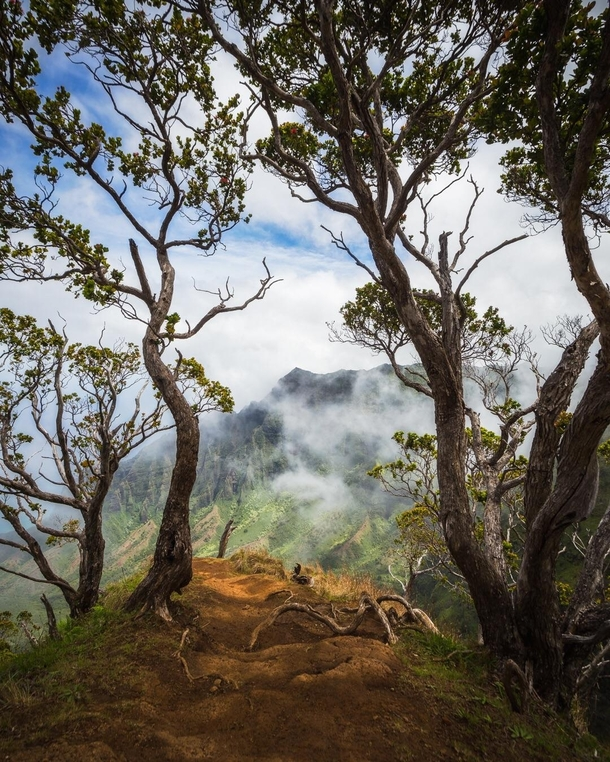 Walking toward the trees I heard birds call saw goats roam off to the left smelled tropical freshness and heard a faint sound of touring helicopters it felt like adventure Hawaii USA  IG natureprofessor