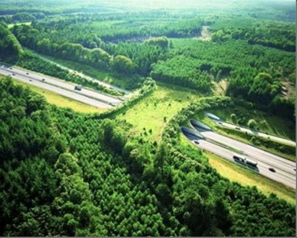 Wildlife bridge located in the Netherlands  Xpost from rPureAwesomeness