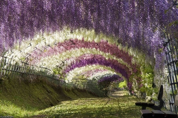 Tochigi | Japan National Tourism Organization (JNTO)