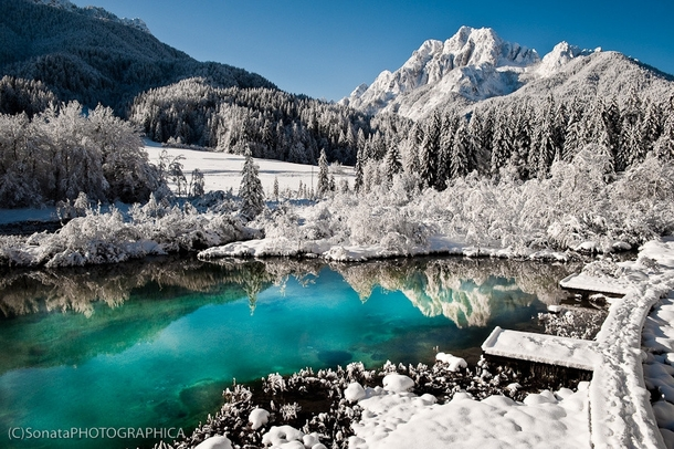 Zelenci Slovenia  x-post from rEarthPorn