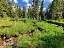 A meadow outside Yellowstone