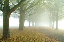 Avenue In The Fog Halton England  algoPhotos