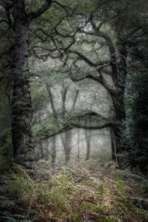 beautifully spooky woodland in North London England x