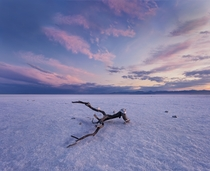 Branch in the middle of the Bonneville Salt Flats