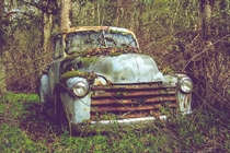 Chevy Pick-Up being reclaimed by nature