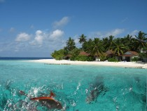 Fishy Talesoff the Island of Thudufushi The