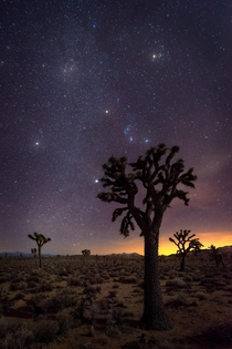 foot Joshua Trees silhouetted by our view of the cosmos Death Valley USA
