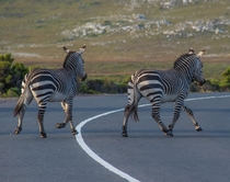 I guess this is a zebra crossing