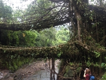 Living root bridges formed from the Ficus Elastica tree found in the north east state of Meghalaya land of clouds in India These bridges take  years to form and can support the weight of  adults  X  pixels
