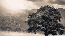 lone tree at Buttermere in the Lake District in England x