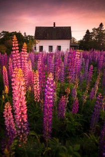 Lupine Cottage  Tremont Maine USA Nate Parker