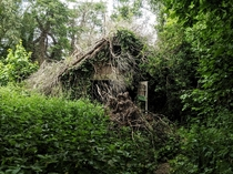 Nature takes over an abandoned hut along the Cuckoo Trail East Sussex