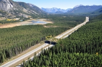 of  wildlife overpasses on the Trans-Canada Highway route through Banff National Park Alberta