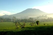 shades of green in east Bali - Good morning to Mount Agung  OC