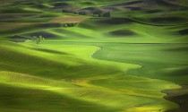 Spring greens in the Palouse Steptoe Butte