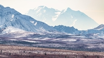 stunning Denali rises up in Denali NP Only  of visitors get to see it we feel lucky x