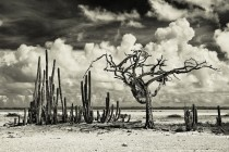 The dry season inBonaire Netherland Antilles