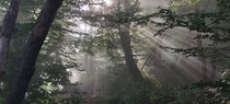 The rays of early morning sunshine breaking through the thick mist of a Slovenian forest x