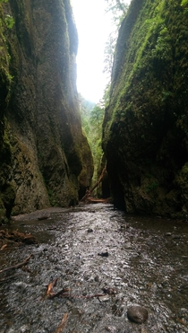 Traversing the Oneonta Gorge near Portland Oregon