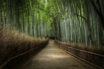 via 500px  Photo The Bamboo Forest by Kyle